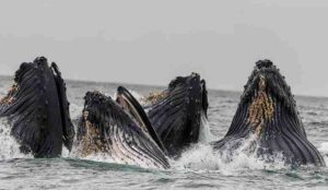 5 Unknown Facts About Aquatic Animals